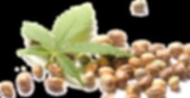 Hemp-Seeds-PNG.png