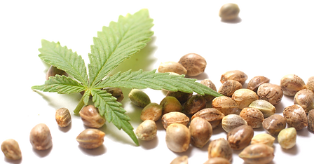 Hemp-Seeds-PNG.png