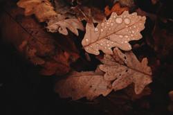 abstract-autumn-autumn-colours-688830_ed