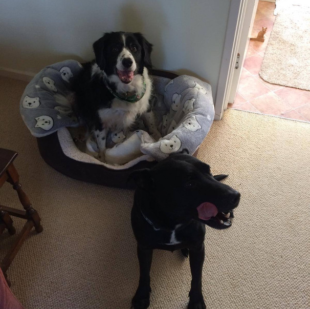 SHADOW & BAILEY - RESERVED
