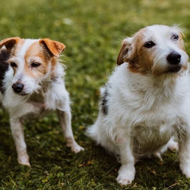 FLO & SCAPA - IN FOSTER