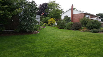 Established Newly Sodded Lawn