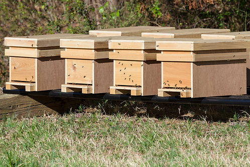 Nucs headed by overwintered Michigan Queens