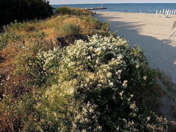 Dune lidi nord Ravenna