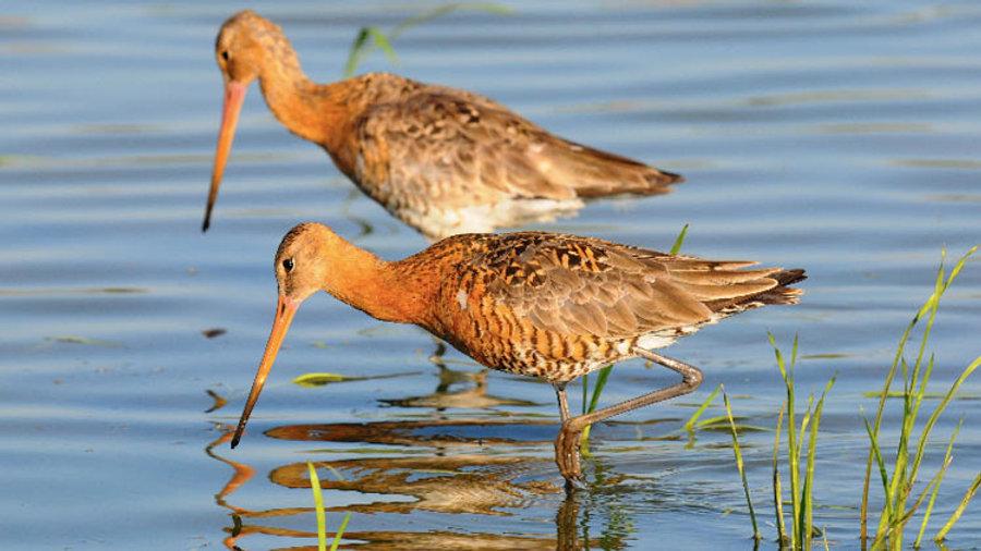 Fauna acquatica Parco delta del Po