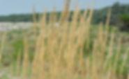 dune-litoranee-ravenna.jpg