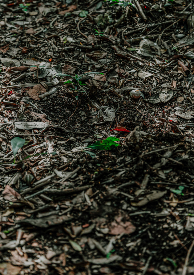 Jaguar's Footprint