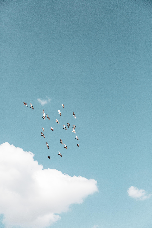 doves flying high