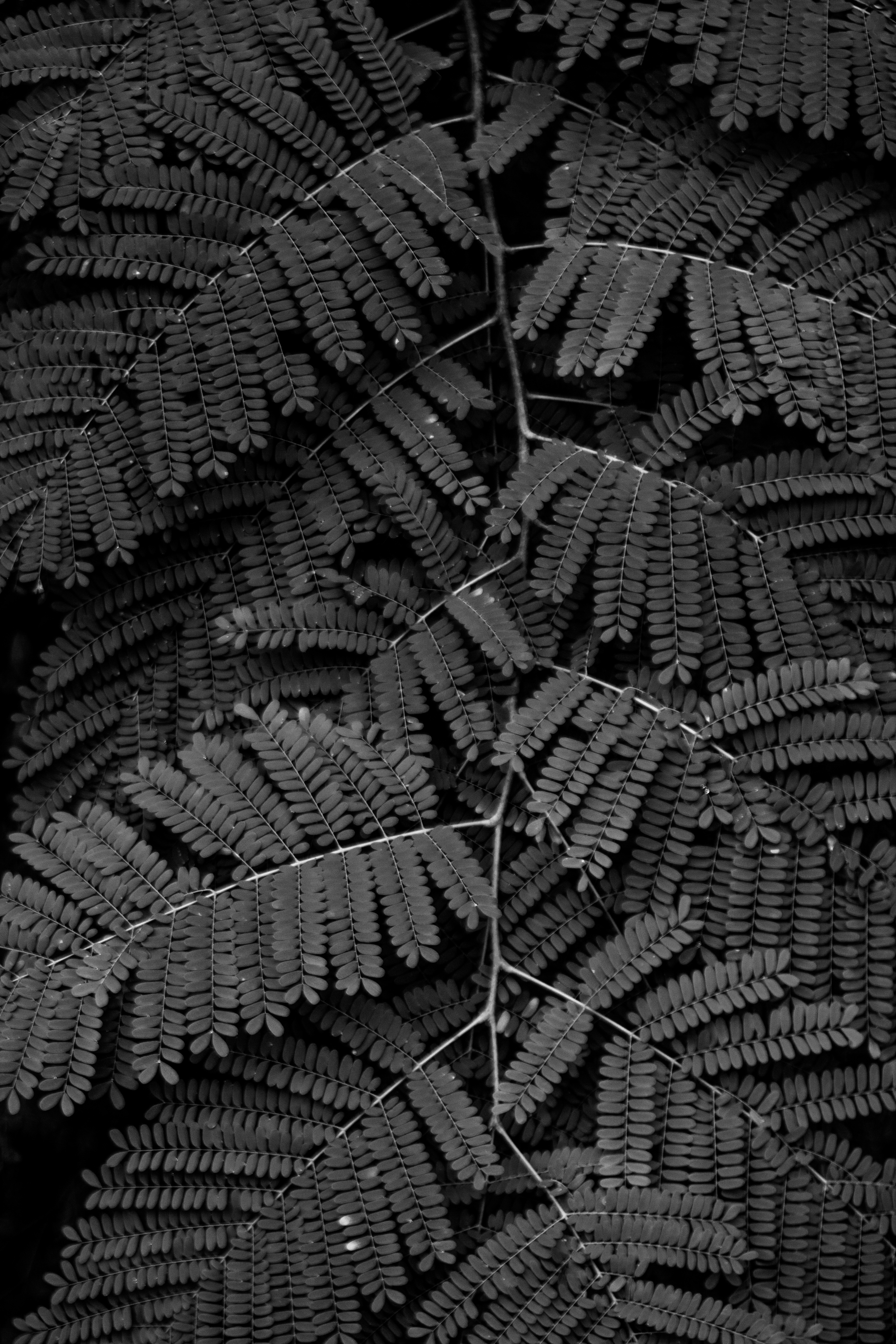 leafs at Brazilian forest
