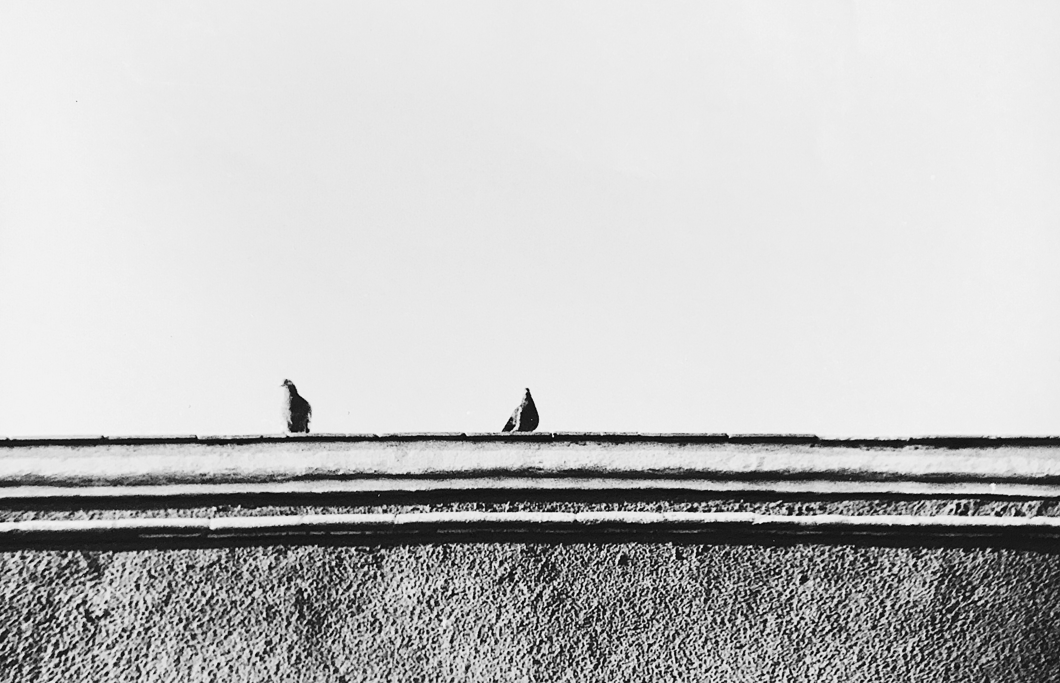Birds at a roof