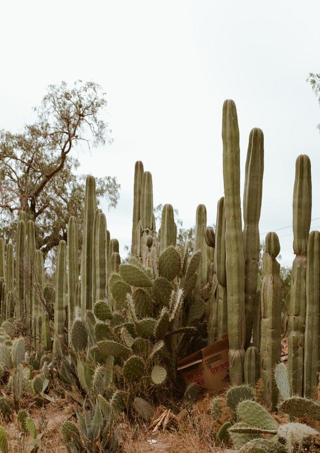RanchoLaQuinta-140.JPG