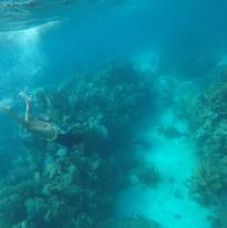 Dive Site Snorkeling