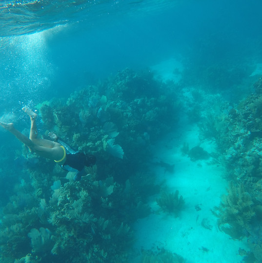 Snorkel Dive Sites