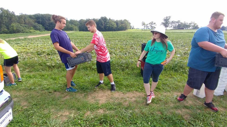 Gleaning 13.jpg
