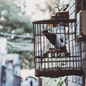 Taking The Easy Way Out Is Like Choosing Your Own Cage