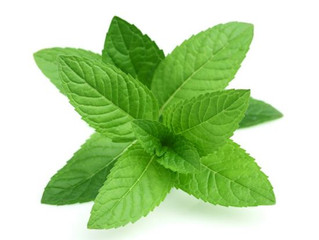 Mint and its many uses