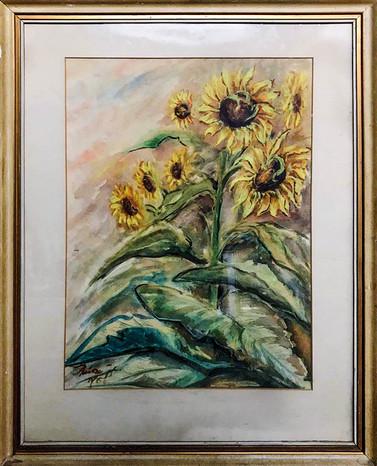 Č. 30 Autor neznámý / Slunečnice / akvarel / rozměr 59 x 45