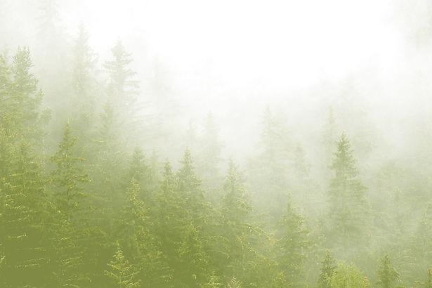 Forest-mist-overlay2a.jpg