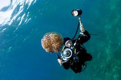 Underwater photography port douglas