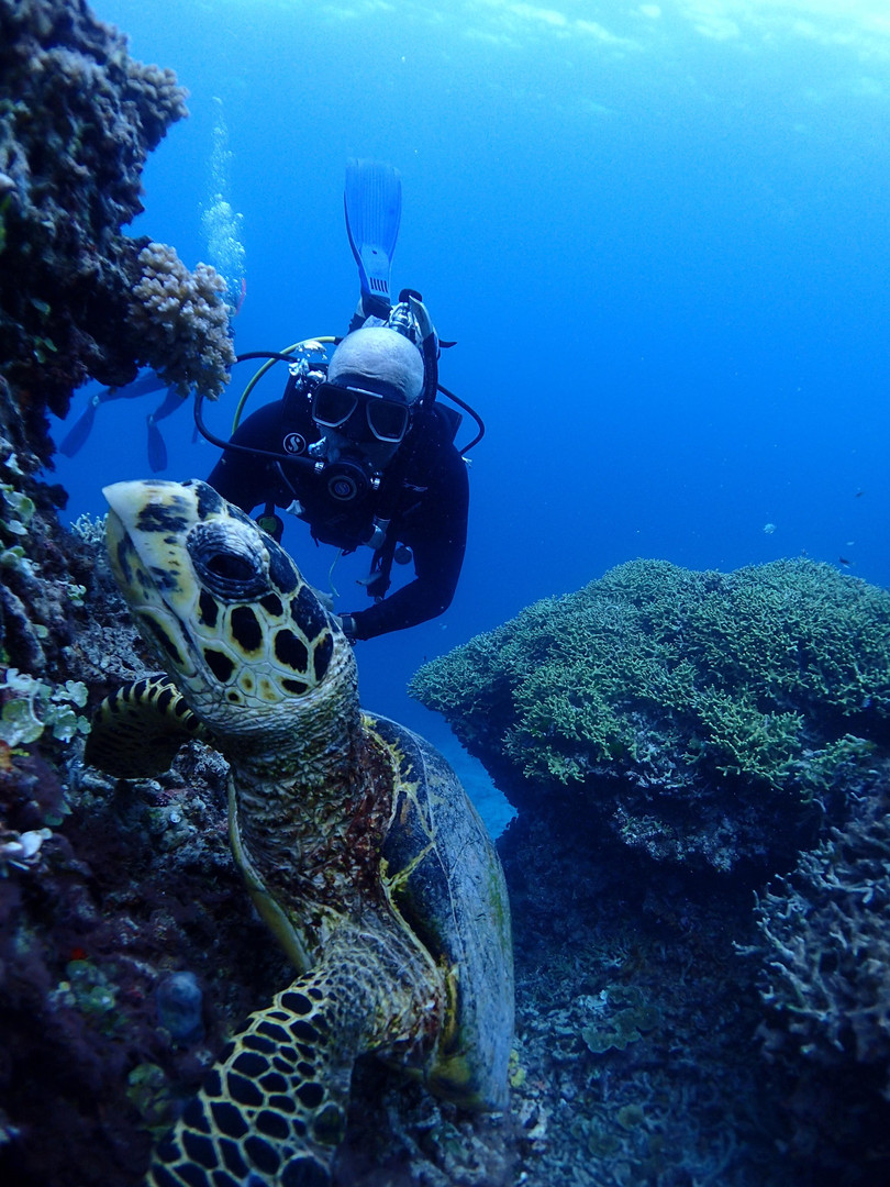 scuba diver and turtle great barrier ree