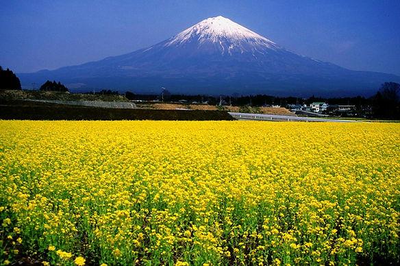 Mount_Fuji_and_Broccolini.jpg