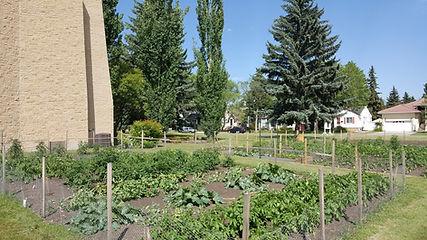 St. Andrew's urban farm