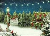 Christmas-Trees-And-Wreaths.jpg