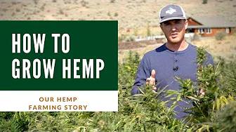 How To Grow Hemp