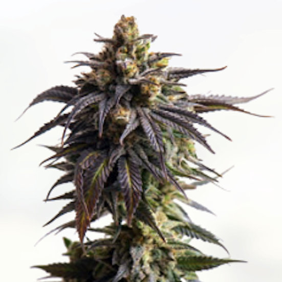 Grape Indica (Non-Feminized)