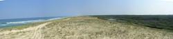 L'Océan des Landes - Dune littorale