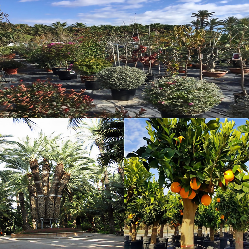 Asejar Viveros Nursery, Plantskola, samt Huerta del Cura, Elche (1)