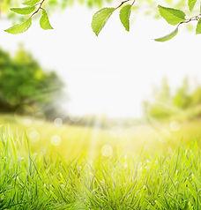 nature background.jpg