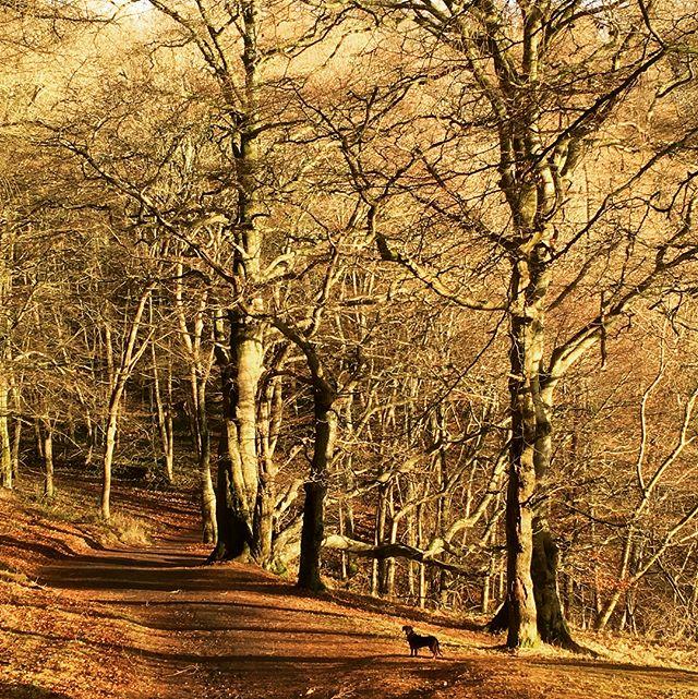 Kinnoull Hill