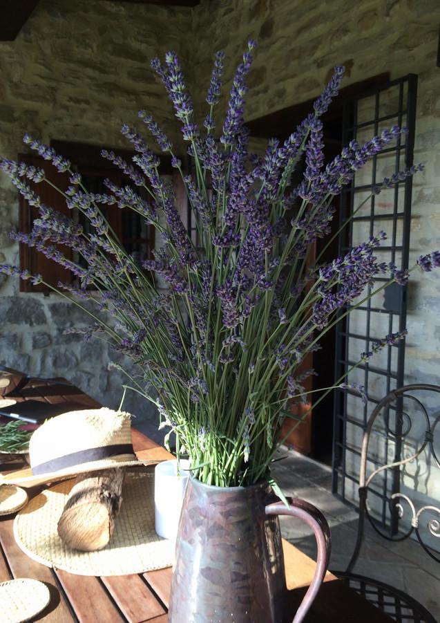 lavender_jug[1].JPG