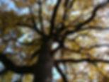 arbre nino.jpg