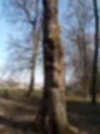 arbre malade.jpg