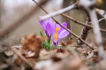 Tulips_2.jpg