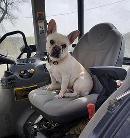Daisy on tractor_edited.jpg