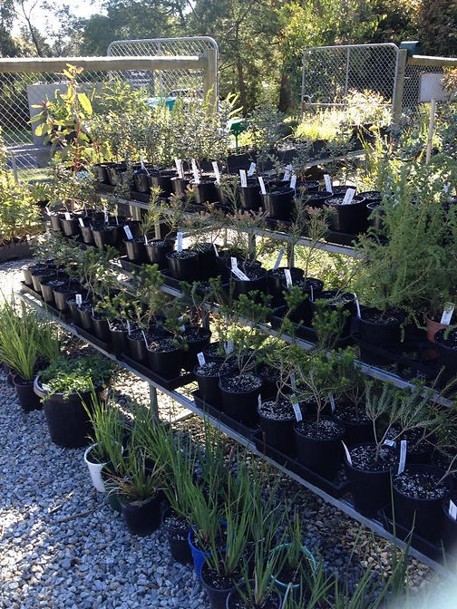 Green Circle Plant Nursery