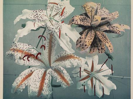 Beautiful HandColoured Japanese Flowers Created by the Pioneering Photographer Ogawa Kazumasa (1896)