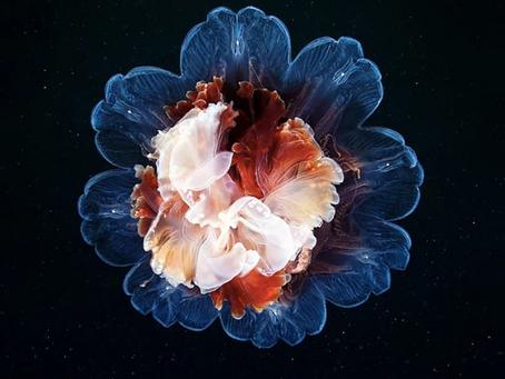 The Alien Beauty Of Jellyfish In Alexander Semenov's Photography