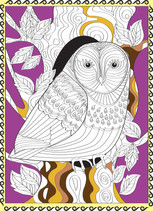 Owl partly coloured.