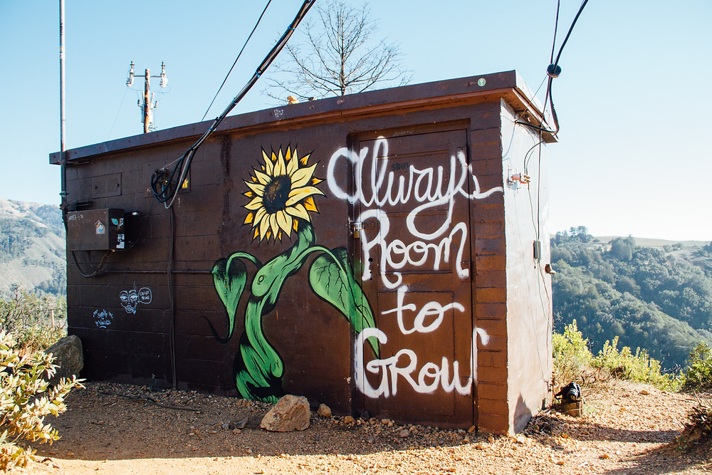 Shed with the words Always Room to Grow painted on it with a sunflower