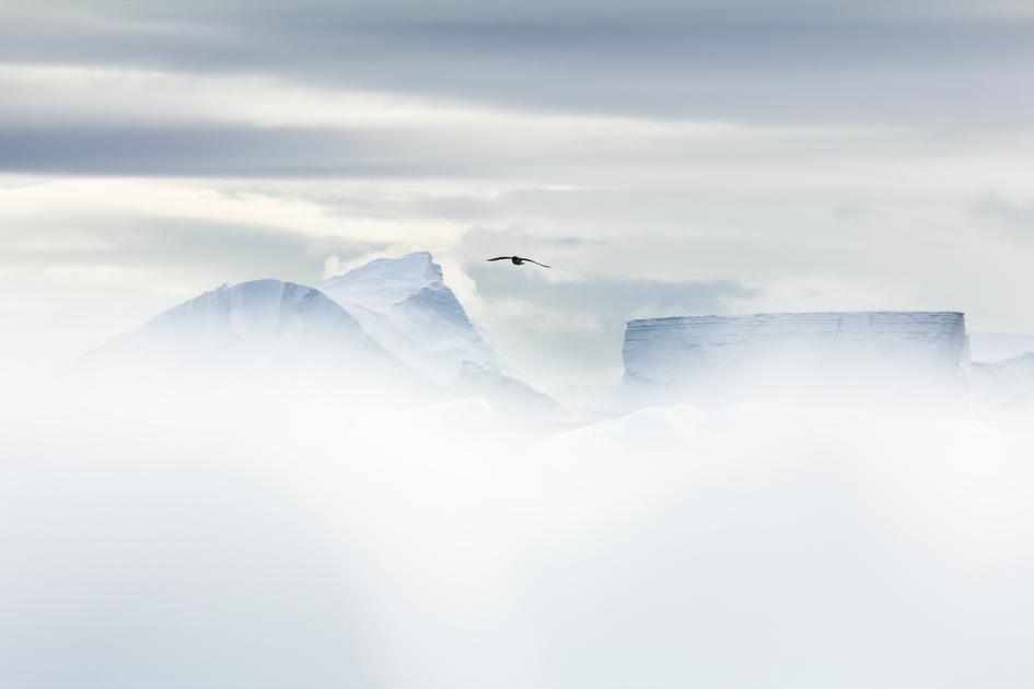 L'ombre de l'iceberg