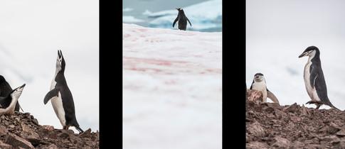 Antarctique_triptyque.jpg