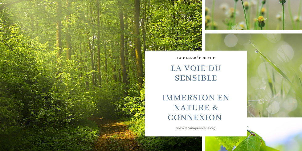Stage Immersion sensible & connexion - 3 Jours
