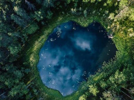 Le temps de l'Ecologie profonde