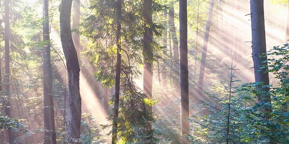 Bain de forêt - Shinrin Yoku - 4 Avril 2020  (1)