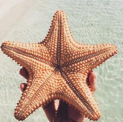 BL105 Find a Starfish!