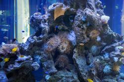 DR300 Bungalow Aquarium